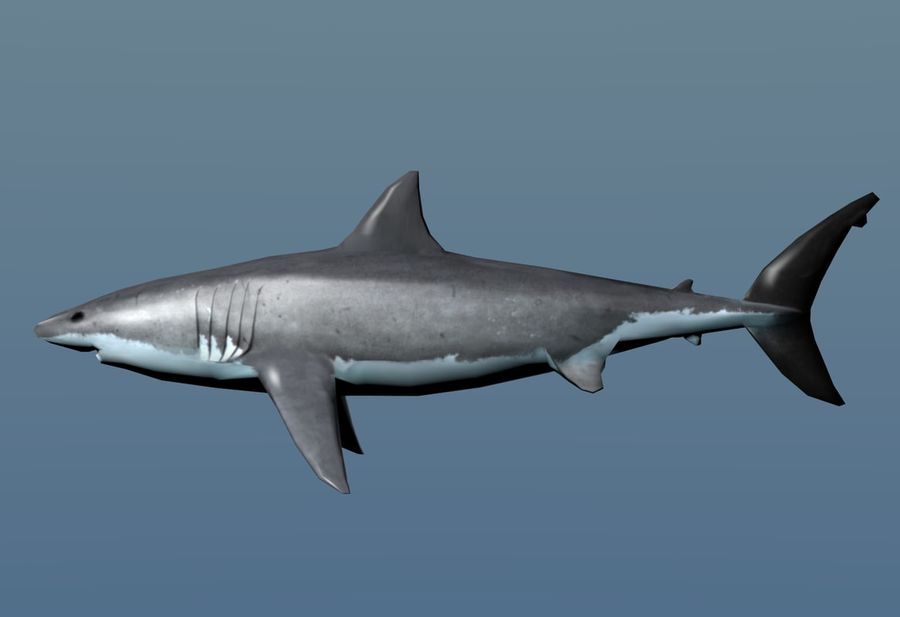 Shark Low Poly royalty-free 3d model - Preview no. 2