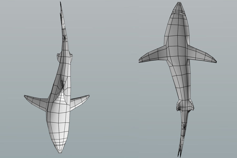 Shark Low Poly royalty-free 3d model - Preview no. 7