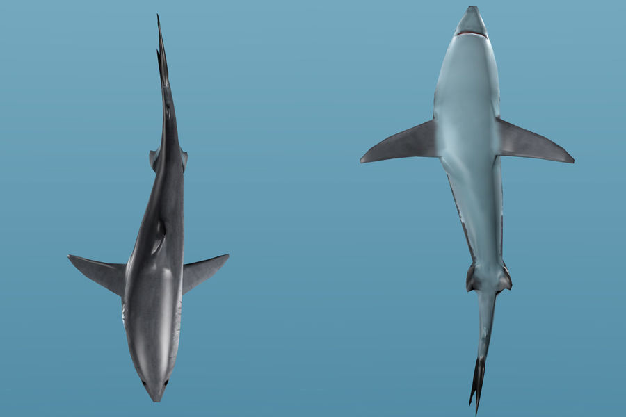 Shark Low Poly royalty-free 3d model - Preview no. 6