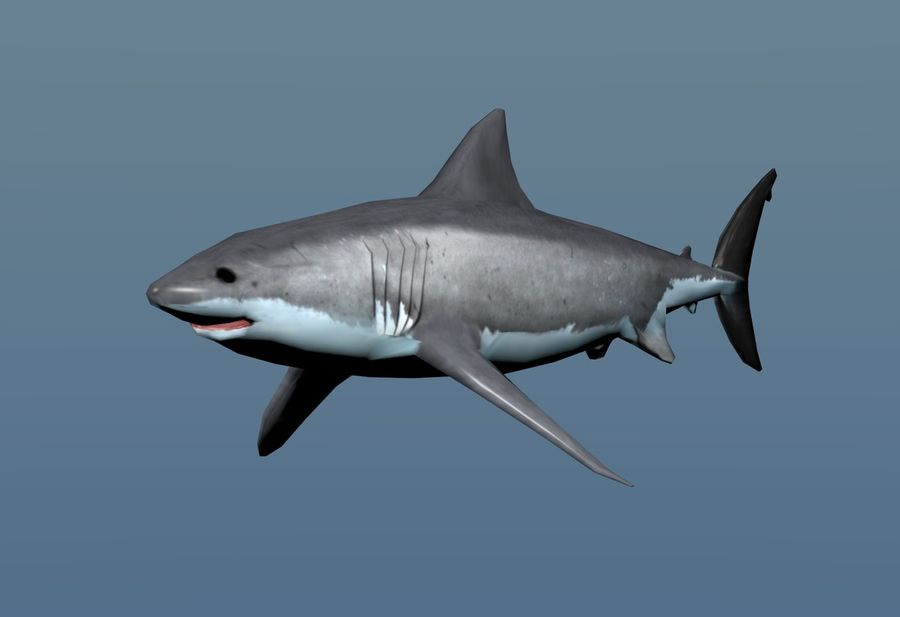 Shark Low Poly royalty-free 3d model - Preview no. 4