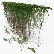 Ivy(11) 3d model