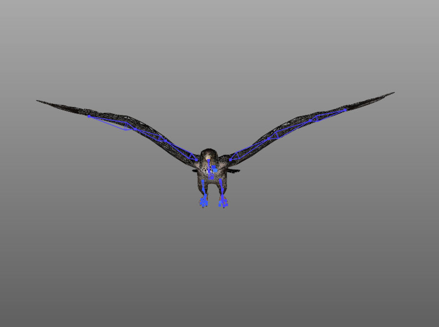 Falcon RIGGED royalty-free 3d model - Preview no. 5