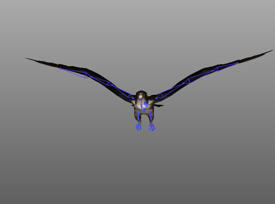 Falcon RIGGED royalty-free 3d model - Preview no. 3