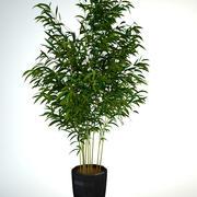 Bambus 2 3d model