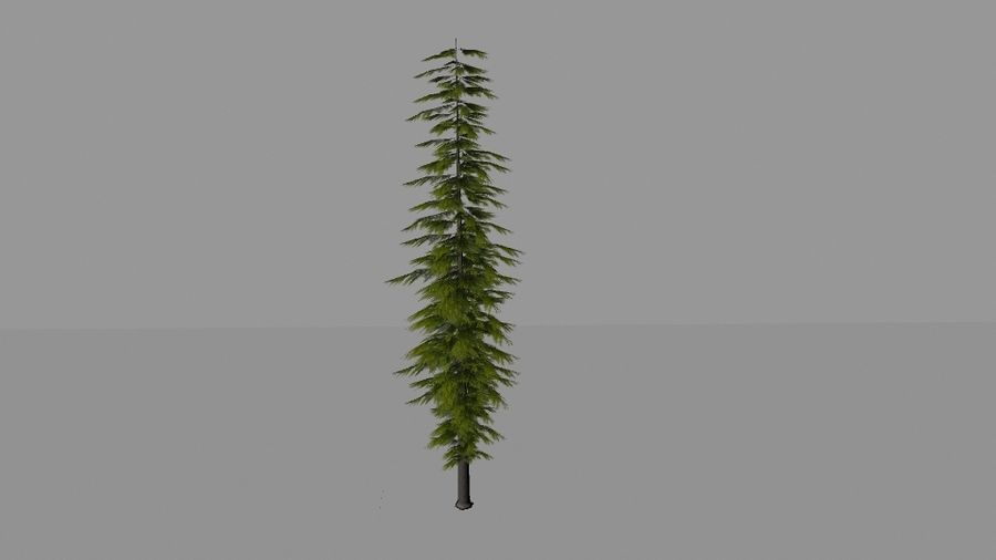 Pine Tree royalty-free 3d model - Preview no. 3