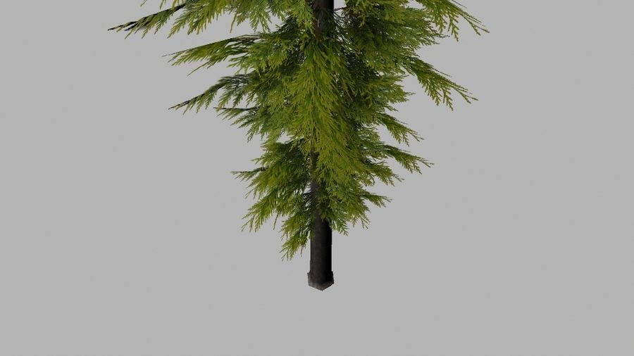 Pine Tree royalty-free 3d model - Preview no. 4