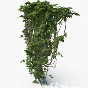Ivy 3d model