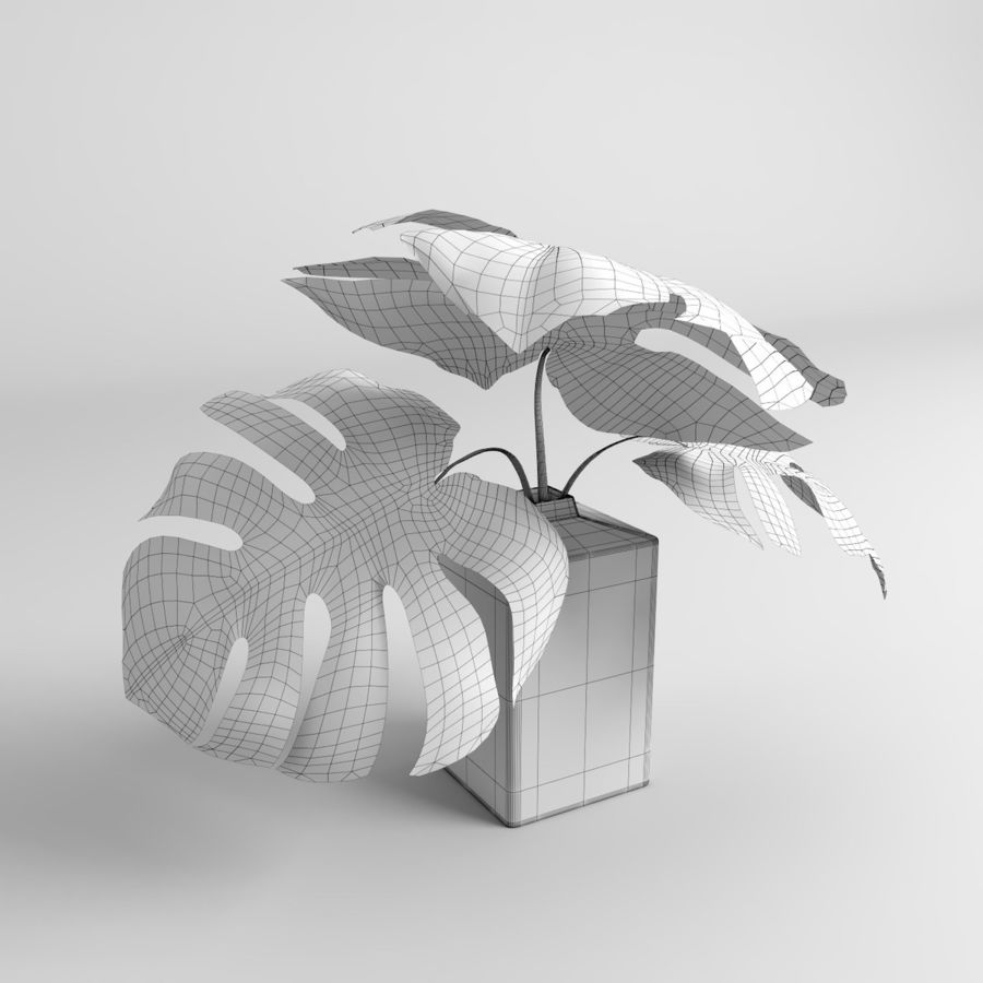 Monstera Plants royalty-free 3d model - Preview no. 17