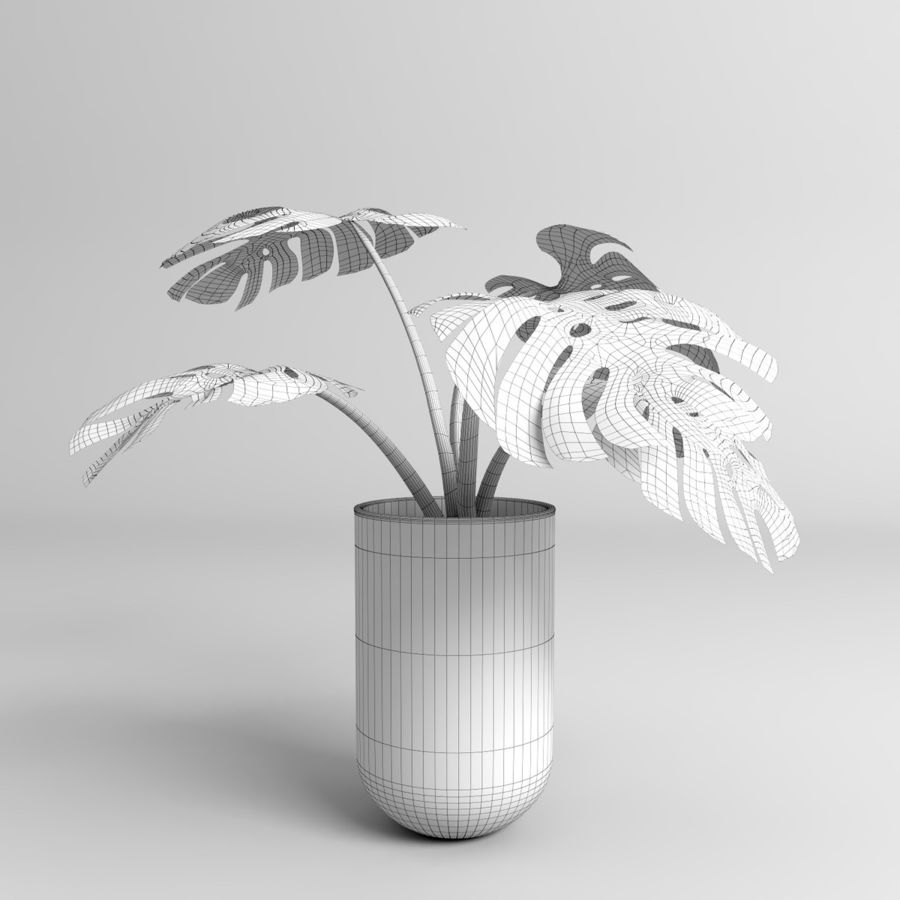 Monstera Plants royalty-free 3d model - Preview no. 16
