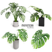 Monstera Plants 3d model