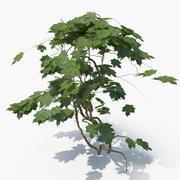Ivy Plant (04) 3d model