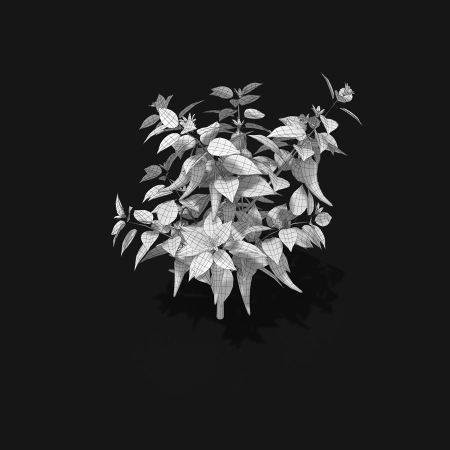 Pepper Plant royalty-free 3d model - Preview no. 7
