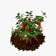 후추 식물 3d model