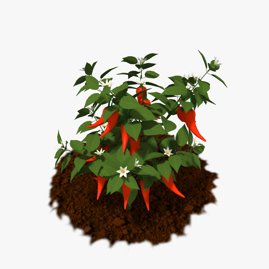Pepper Plant royalty-free 3d model - Preview no. 1