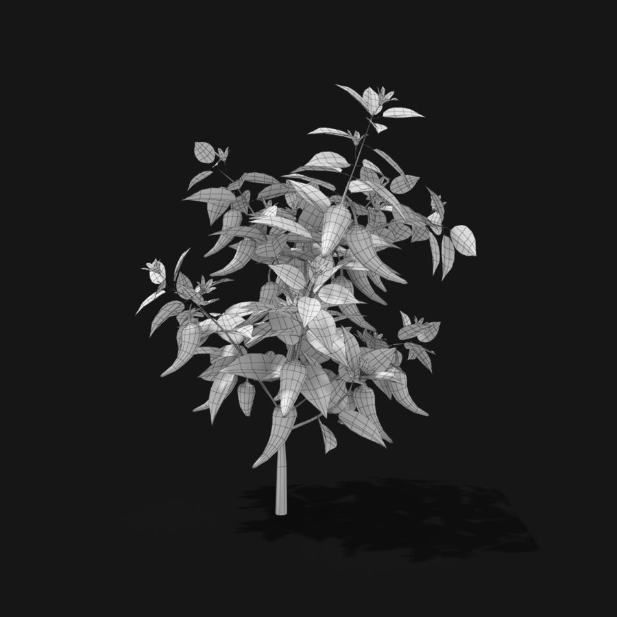 Pepper Plant royalty-free 3d model - Preview no. 8