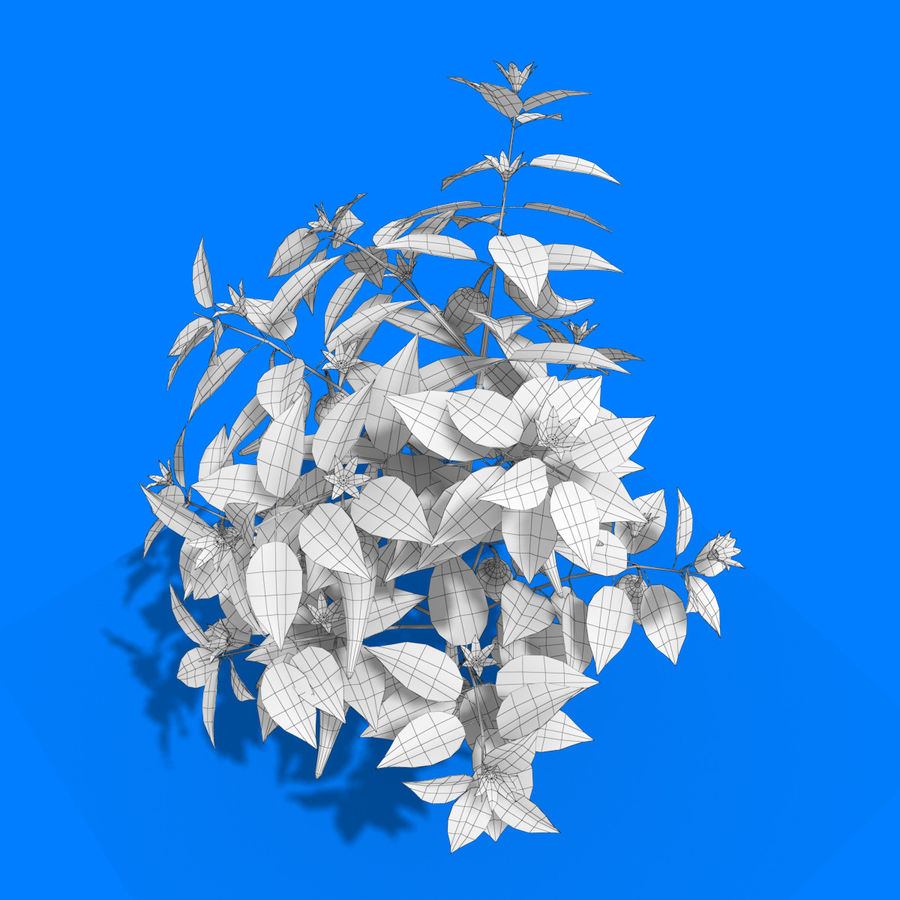 Pepper Plant royalty-free 3d model - Preview no. 10