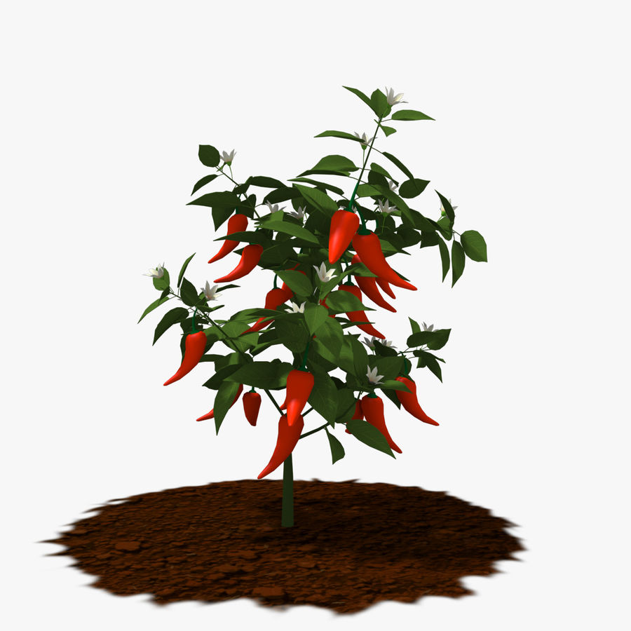 Pepper Plant royalty-free 3d model - Preview no. 2