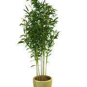 竹子1 3d model