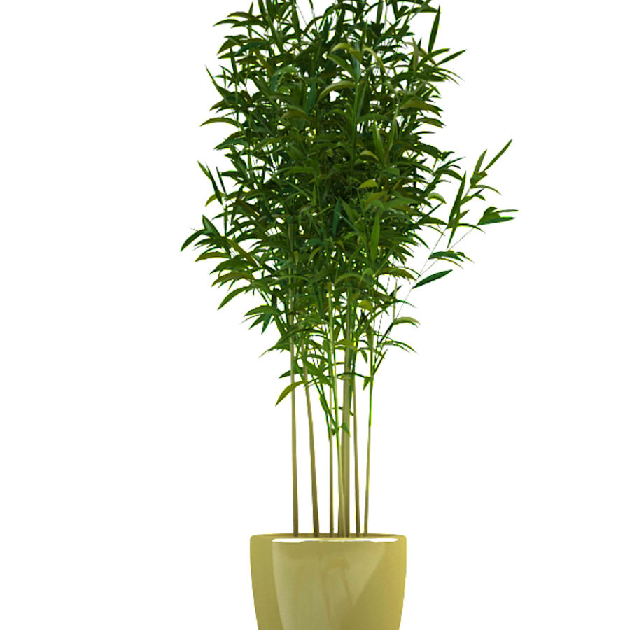 bamboo 1 royalty-free 3d model - Preview no. 4