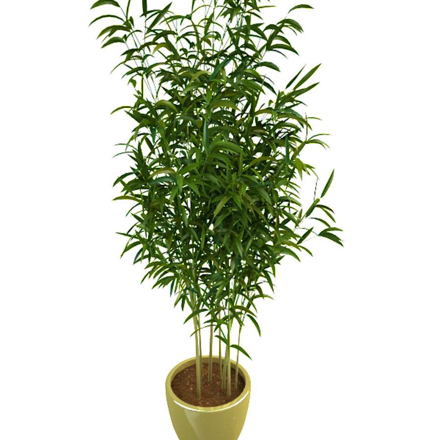 bambù 1 royalty-free 3d model - Preview no. 5