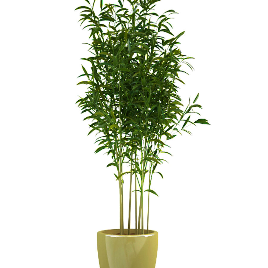 bamboo 1 royalty-free 3d model - Preview no. 2