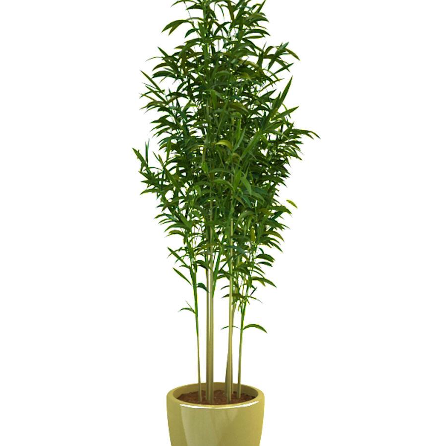 bambù 1 royalty-free 3d model - Preview no. 3