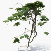Ivy Plant (07) 3d model