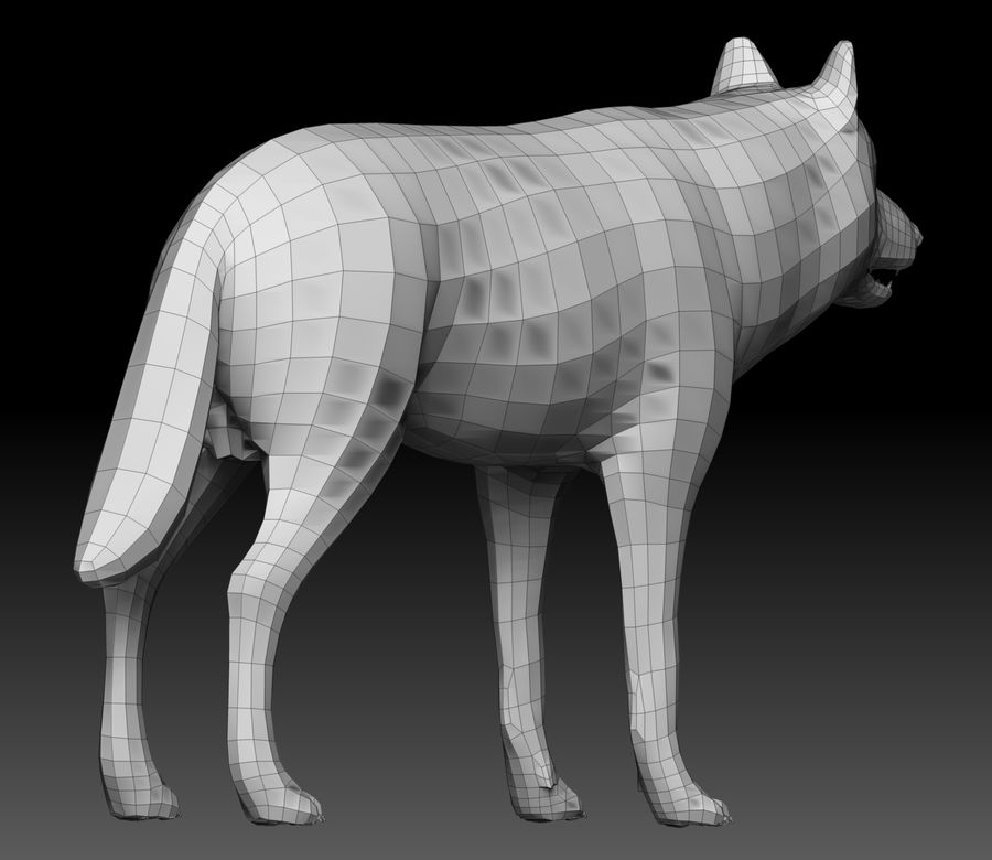 Wolf Base Mesh royalty-free 3d model - Preview no. 7