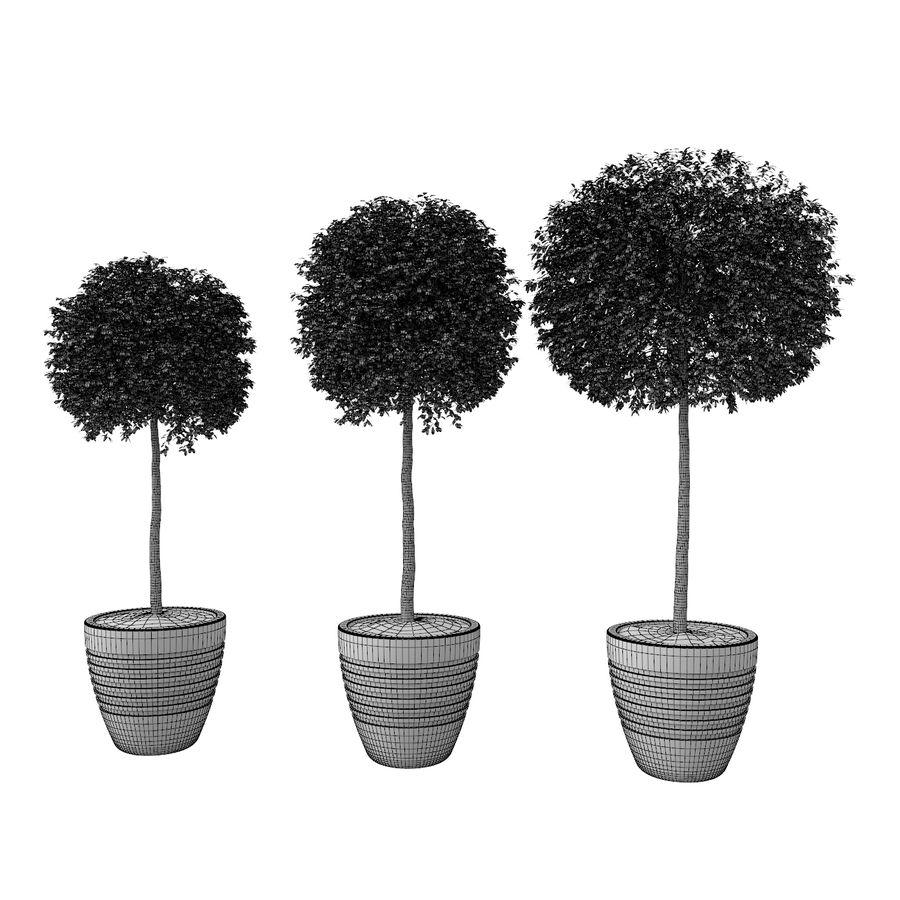 Drzewo bukszpanu royalty-free 3d model - Preview no. 7