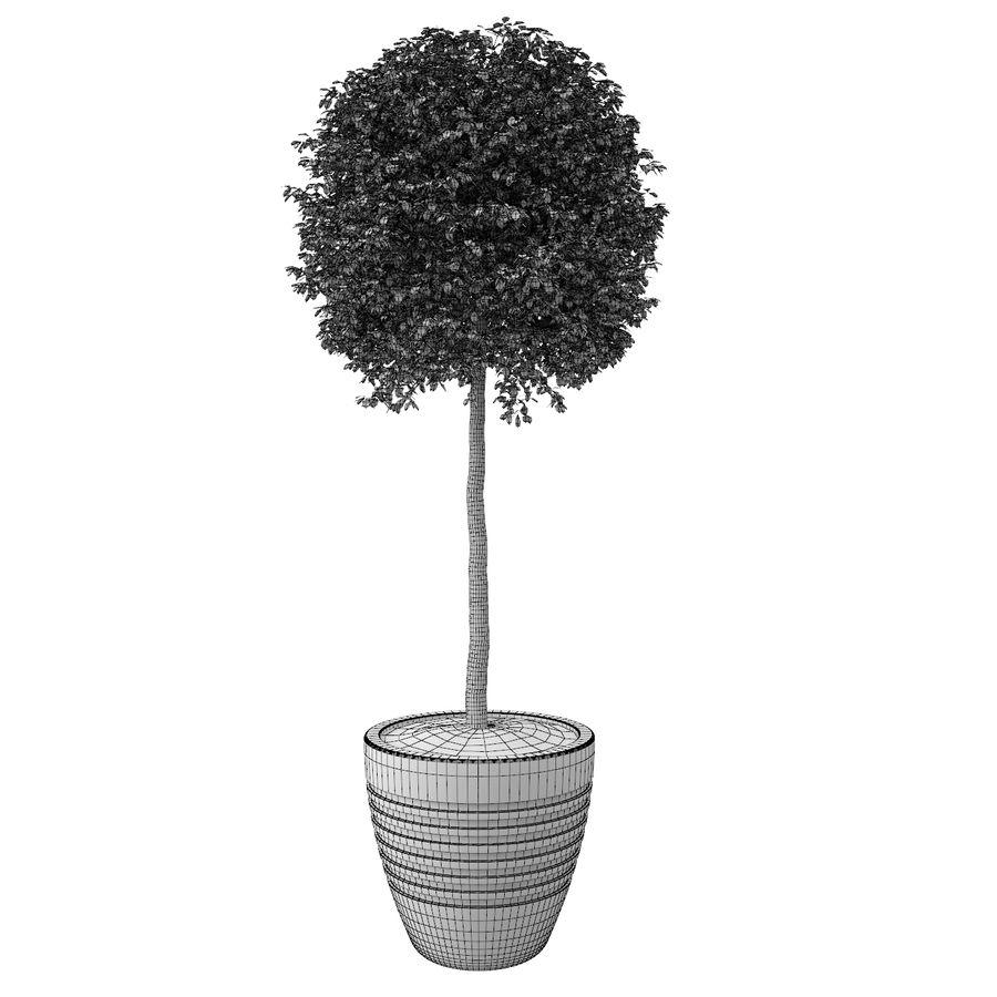 Drzewo bukszpanu royalty-free 3d model - Preview no. 8