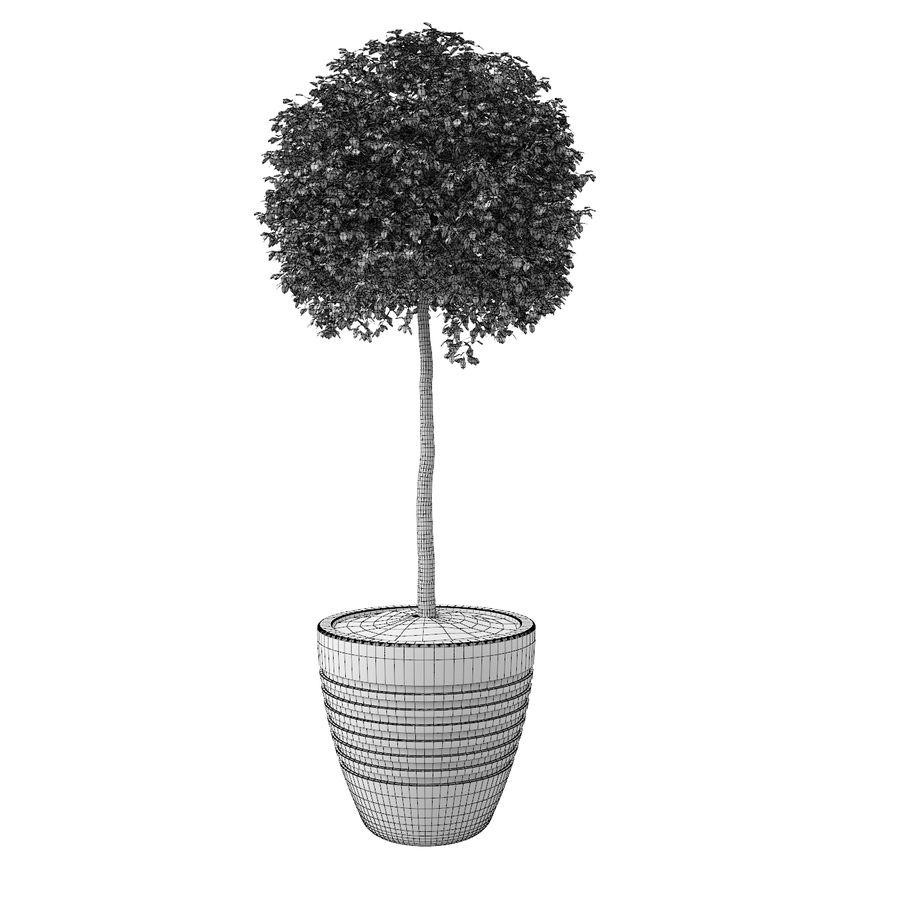 Drzewo bukszpanu royalty-free 3d model - Preview no. 9