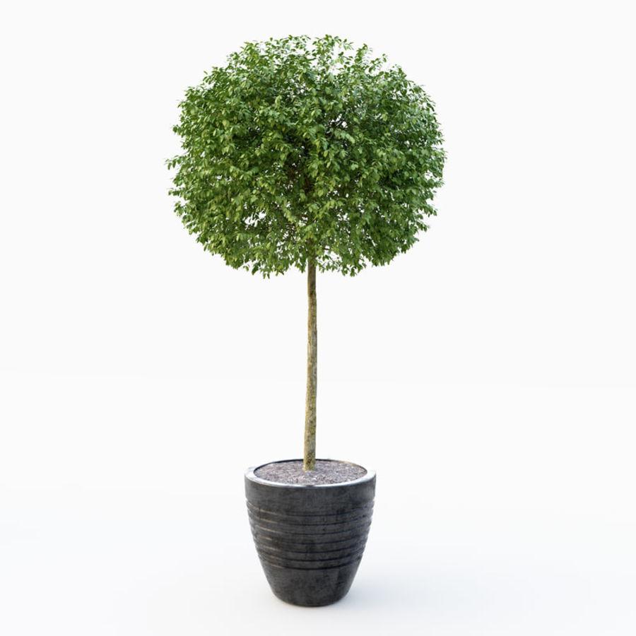 Drzewo bukszpanu royalty-free 3d model - Preview no. 2