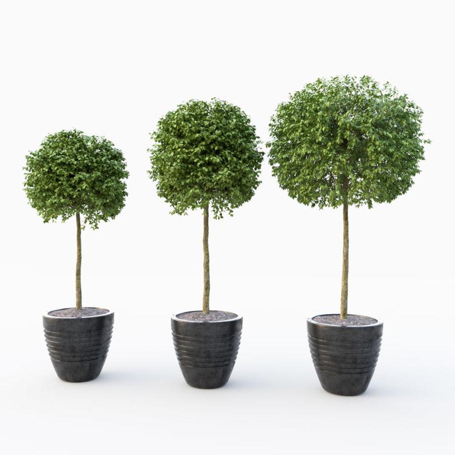 Drzewo bukszpanu royalty-free 3d model - Preview no. 1