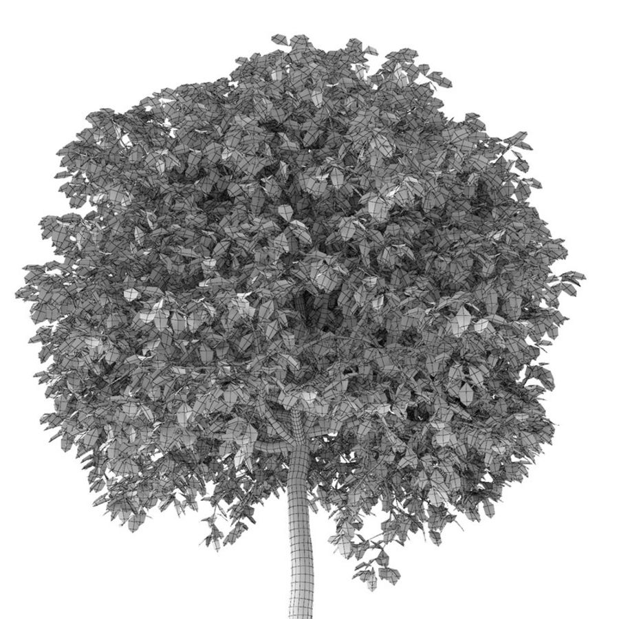 Drzewo bukszpanu royalty-free 3d model - Preview no. 12