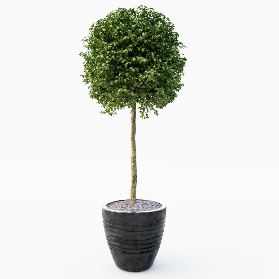Drzewo bukszpanu royalty-free 3d model - Preview no. 3