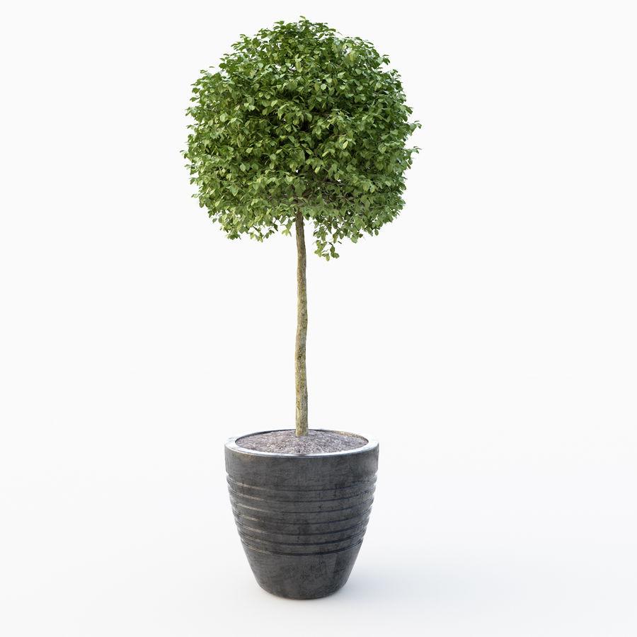Drzewo bukszpanu royalty-free 3d model - Preview no. 4