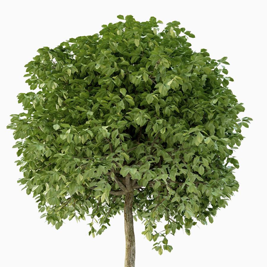 Drzewo bukszpanu royalty-free 3d model - Preview no. 6