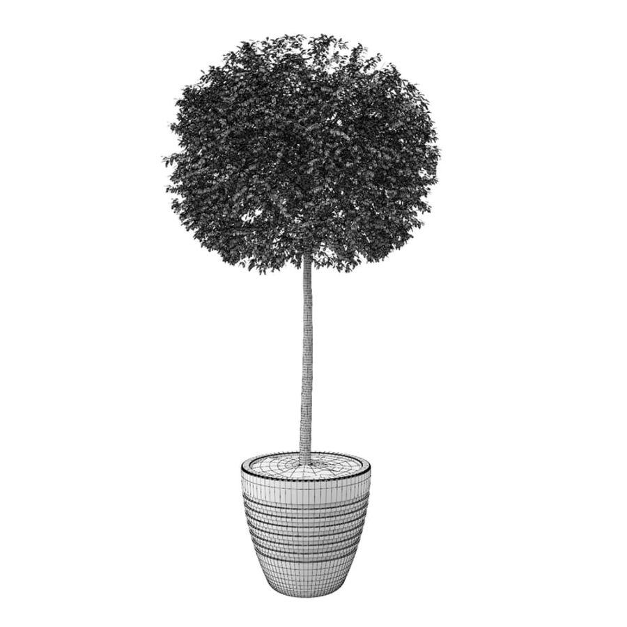 Drzewo bukszpanu royalty-free 3d model - Preview no. 10