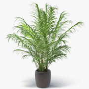 Areca Palm In Pot 3d model