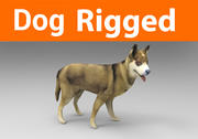 dog rigged(1) 3d model