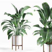 pianta 3d model