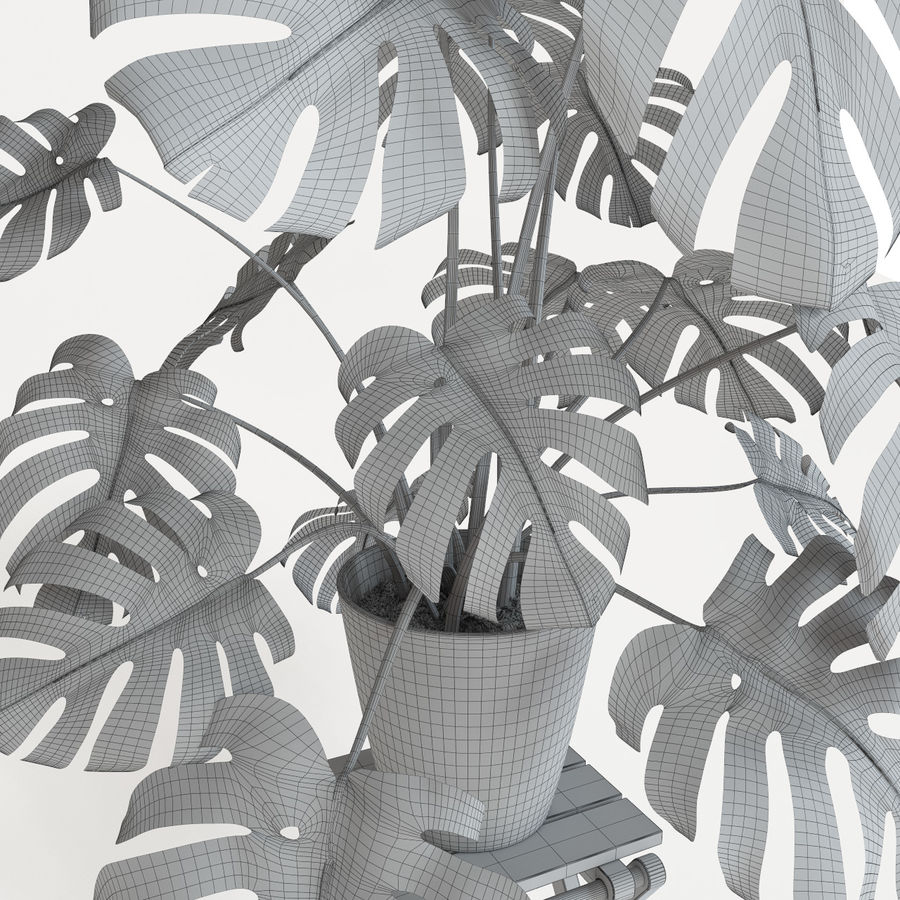 Monstera royalty-free 3d model - Preview no. 7