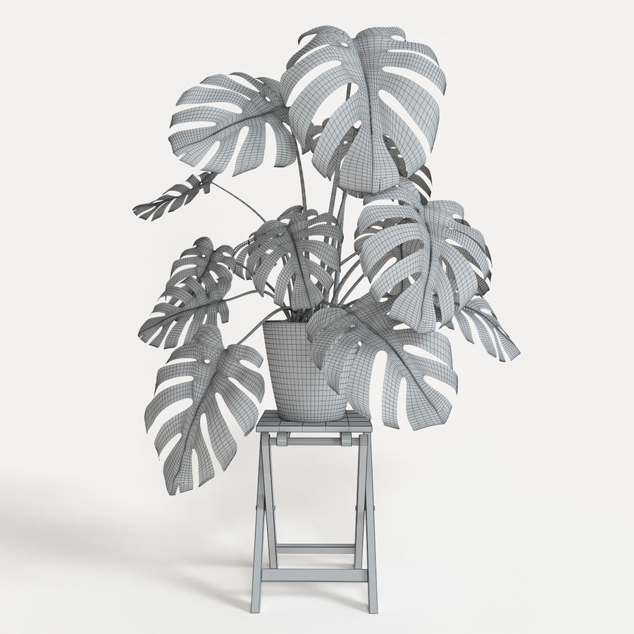 Monstera royalty-free modelo 3d - Preview no. 5