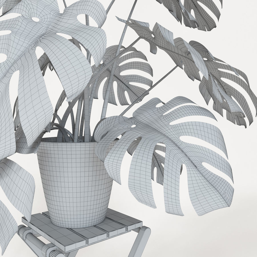 Monstera royalty-free 3d model - Preview no. 8