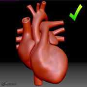 Coeur maille 3d model