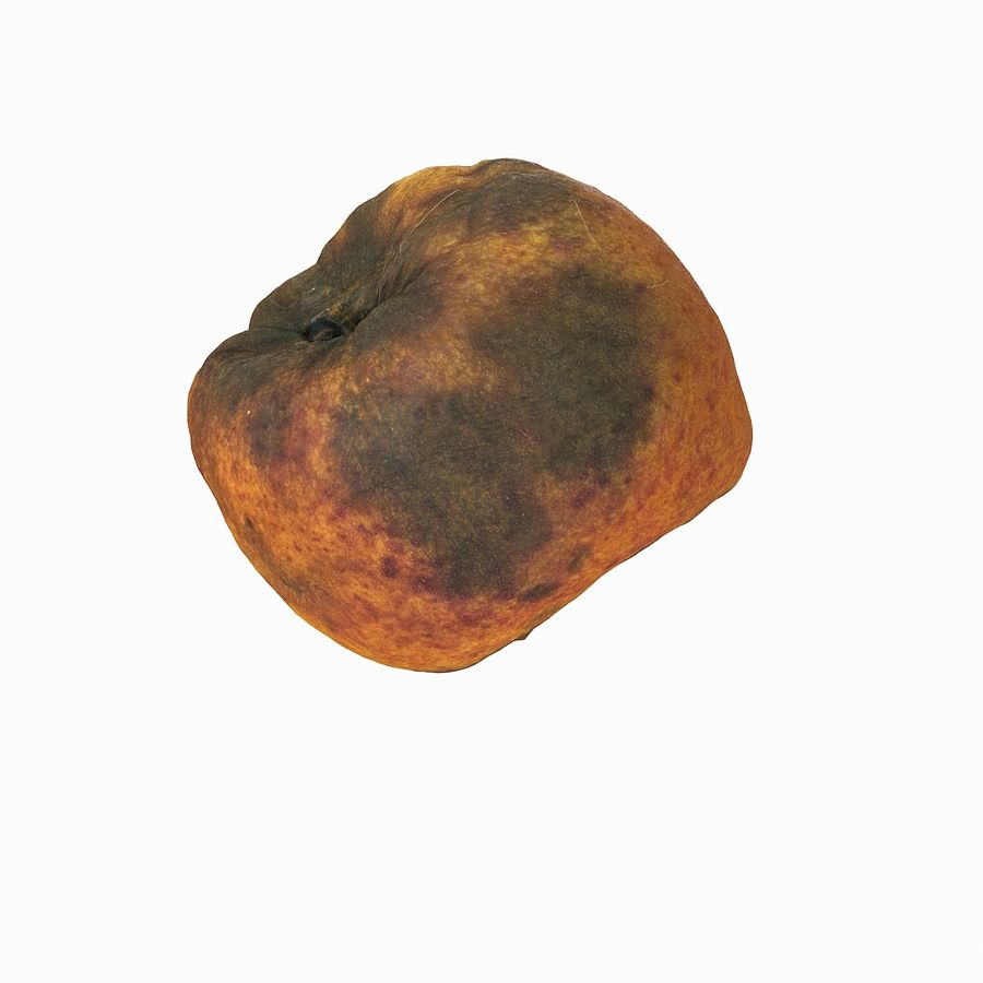 Rotten Rotte Apricot 03 royalty-free 3d model - Preview no. 28