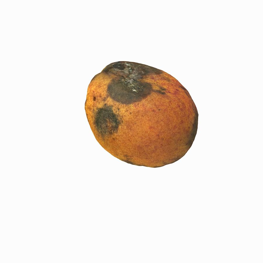 Rotten Rotte Apricot 03 royalty-free 3d model - Preview no. 22