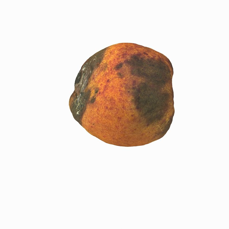 Rotten Rotte Apricot 03 royalty-free 3d model - Preview no. 15