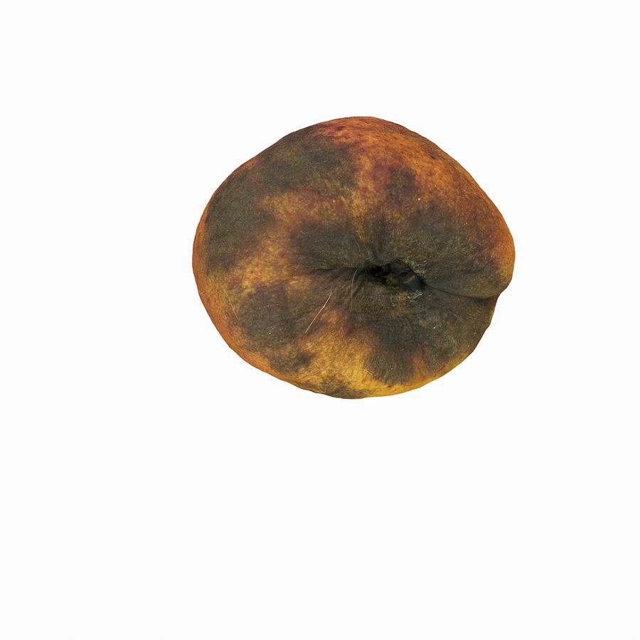 Rotten Rotte Apricot 03 royalty-free 3d model - Preview no. 17