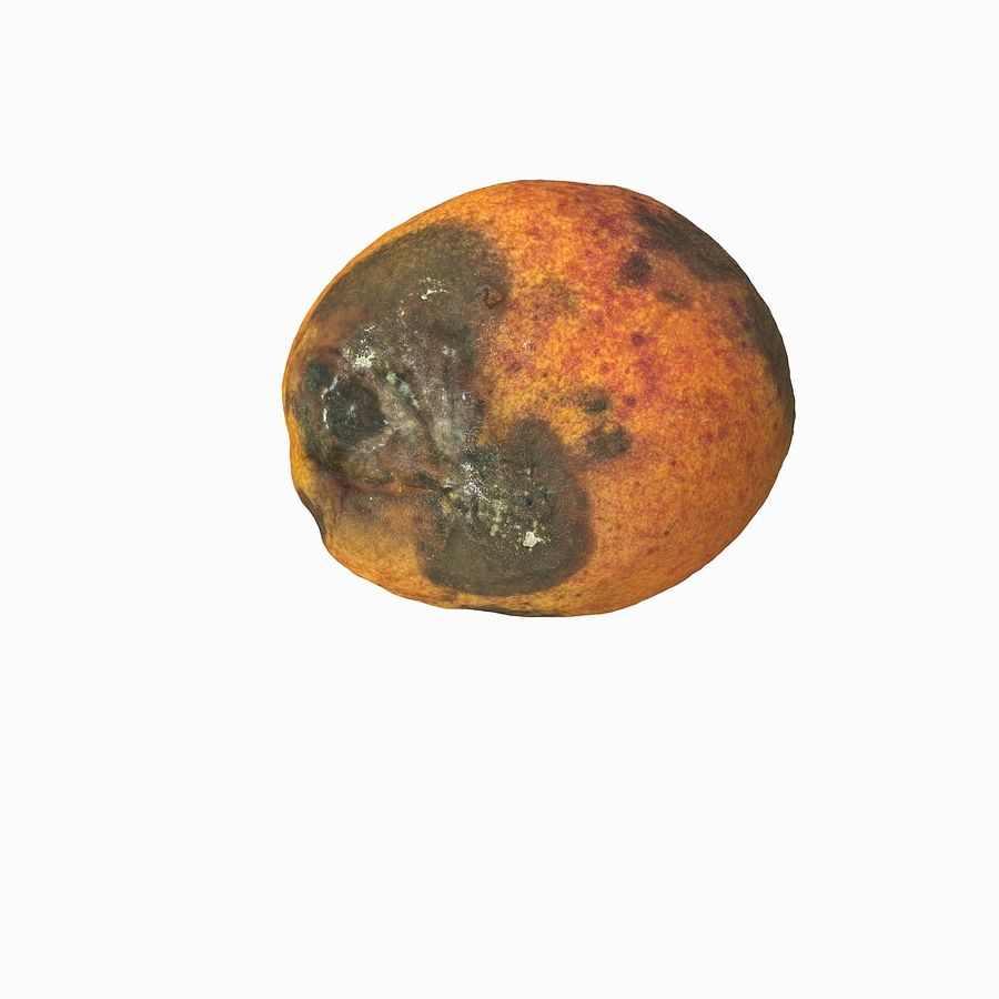 Rotten Rotte Apricot 03 royalty-free 3d model - Preview no. 4